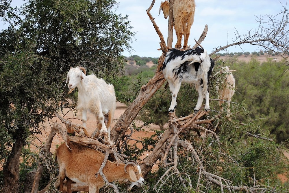 Gardens and Other Stories - Magic & Mystery: The Argan Tree